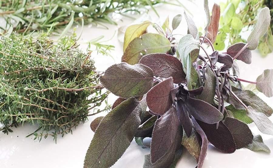 Jak mrozić świeże zioła domowym sposobem